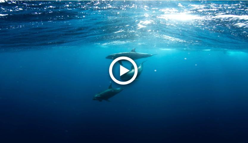 Geleide meditatie- Dolfijn_walvis meditatie (ademhaling & visualisatie)