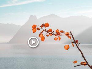 Zen mindfulness muziek - Japanse Fluit